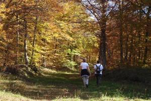 marcheurs-sous-bois-automne